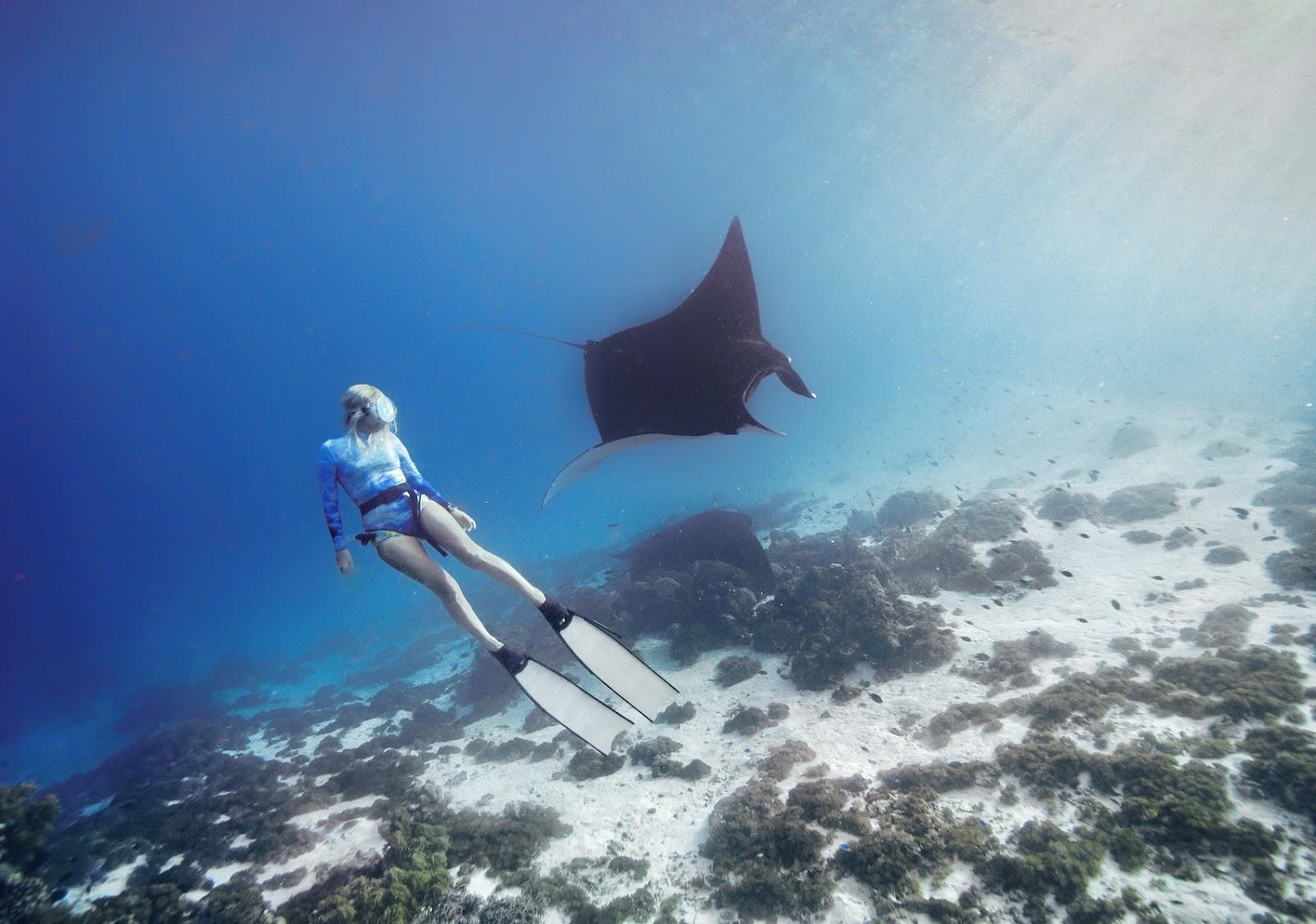 "<a href=""http://mataram.info/things-to-do-in-bali/visitindonesia-banda-marine-life-the-paradise-of-diving-topographic-point-inward-fundamental-maluku/"">Indonesia</a>best destinations : Best Swimming Alongside Manta Rays: Komodo National Park"