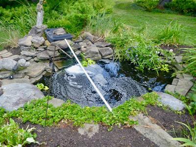 empty koi pond