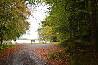 View of forest path and Lough MacNean Leitrim