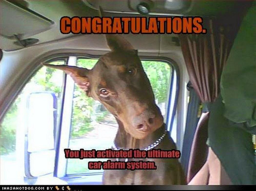 Congratulations funny dog