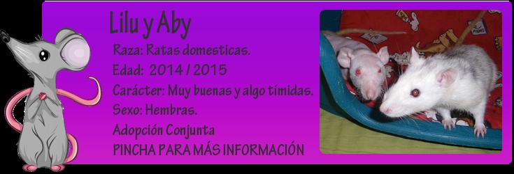 http://almaexoticos.blogspot.com.es/2015/07/lilu-y-aby-las-ratas-mas-necesitadas-de.html