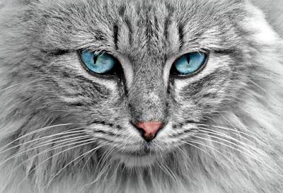 Inilah Penjelasan Lengkap Mengenai Kucing Fakta Dan