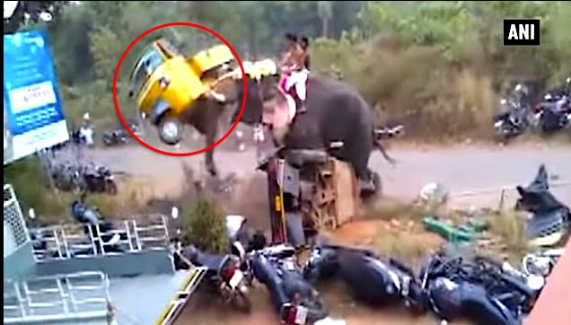Furious elephant demolishes vehicles in an outburst of anger