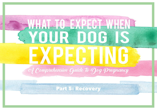 What to Expect When Your Dog is Expecting: Part 5 - Recovery