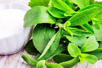 Stevia (Şeker Otu) Bitkisi Fotoğrafı