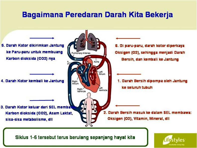 INTRA - Suplemen Herbal Terbaik | INTRA Lifestyles Indonesia