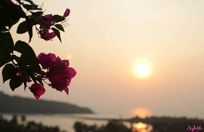 An image of seaside sunset with mountains and pink bougainvillea flowers on a summer holiday break in Goa, India