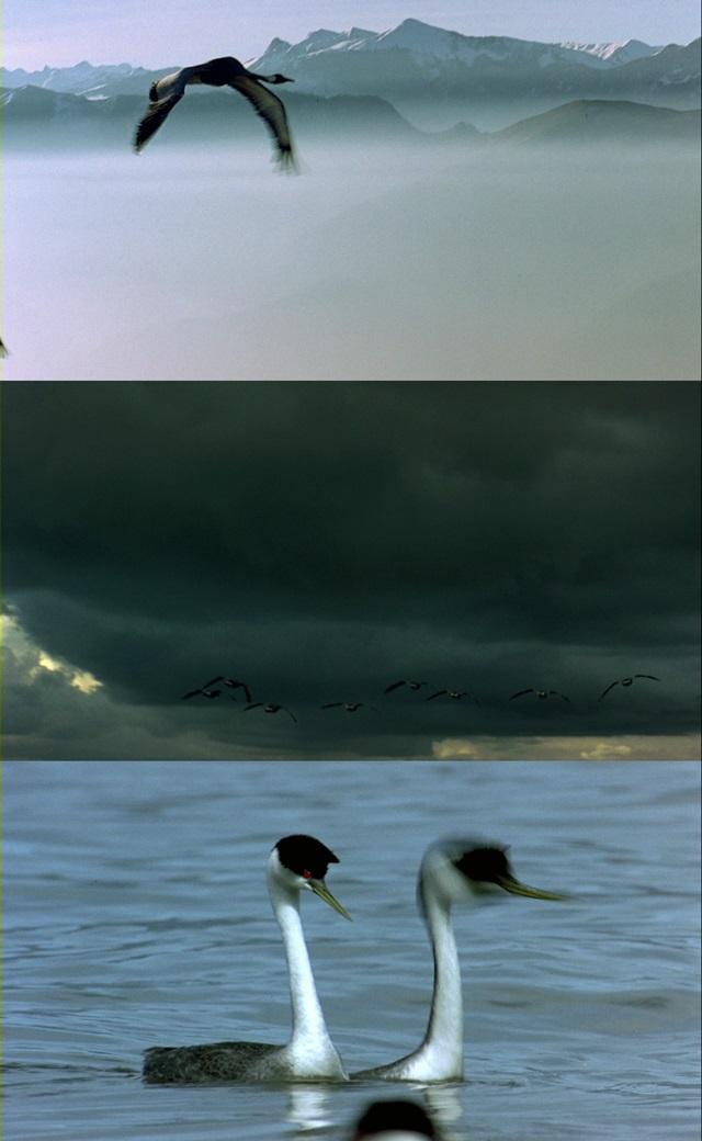Kuşlar Kanatlı Uygarlık (2001) 720p Film indir