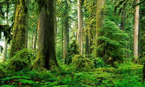 Η Ευρώπη έχει χάσει πάνω από τα μισά προϊστορικά της δάση
