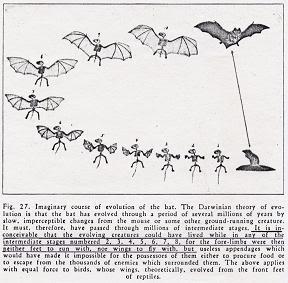 Teori Evolusi Biologi Juga Melibatkan