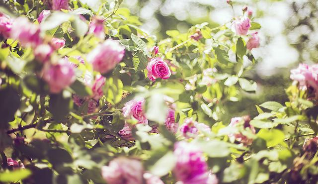 Przywołujemy wiosnę || inspiracje