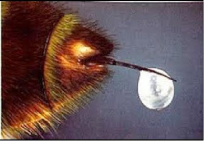 EL VENENO DE LAS ABEJAS - THE VENOM OF THE BEES.
