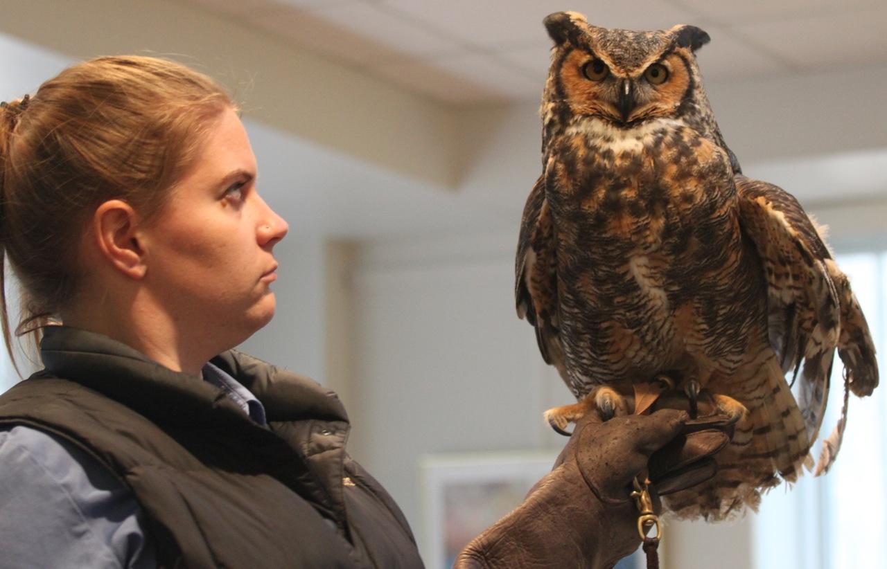 Kalamazoo Seasons: Great Horned Owl