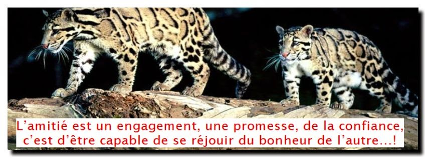 citations sur belle rencontre