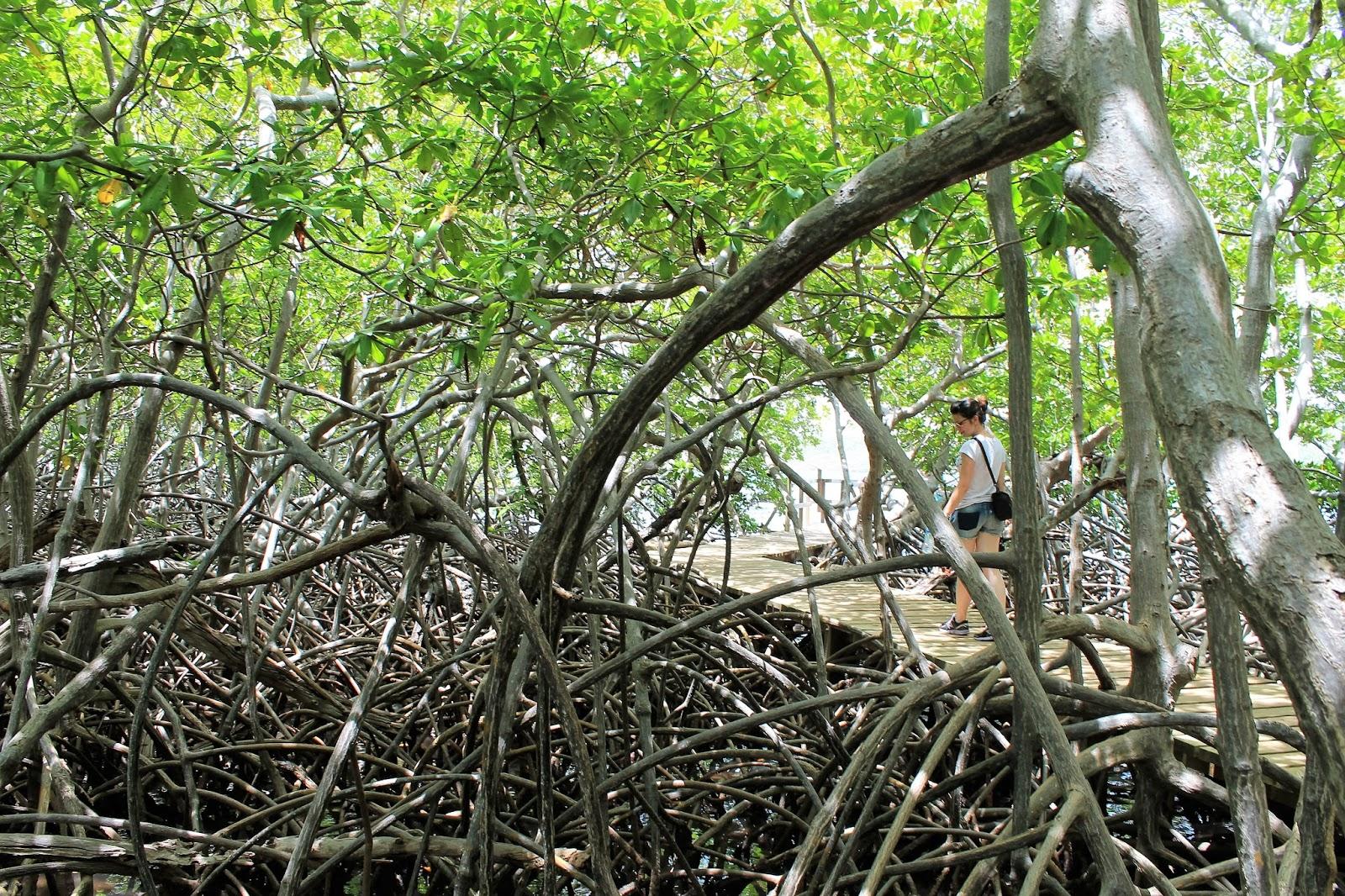 martinique île presqu'île caravelle  soleil  mangrove randonnée gorge de la falaise ajoupa bouillon