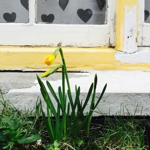 Spring Flowers in Polperro