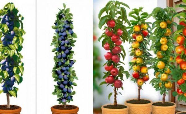 Verde time by stefano tenneroni come coltivare in vaso for Piante da frutto nane