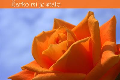 """Buket ruža ove tople boje je savršen dar nekome, kome želite kazati """" Žarko mi je stalo""""."""
