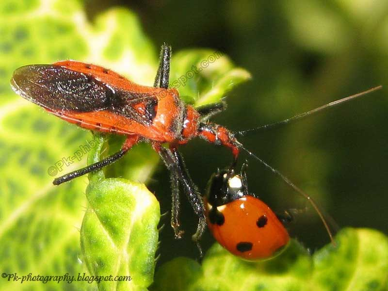 What do insects eat?  Nature, Cultural, and Travel ...