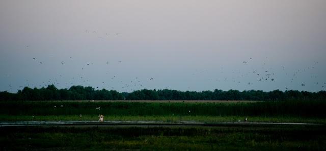 Pelican la Dunavatu de Jos