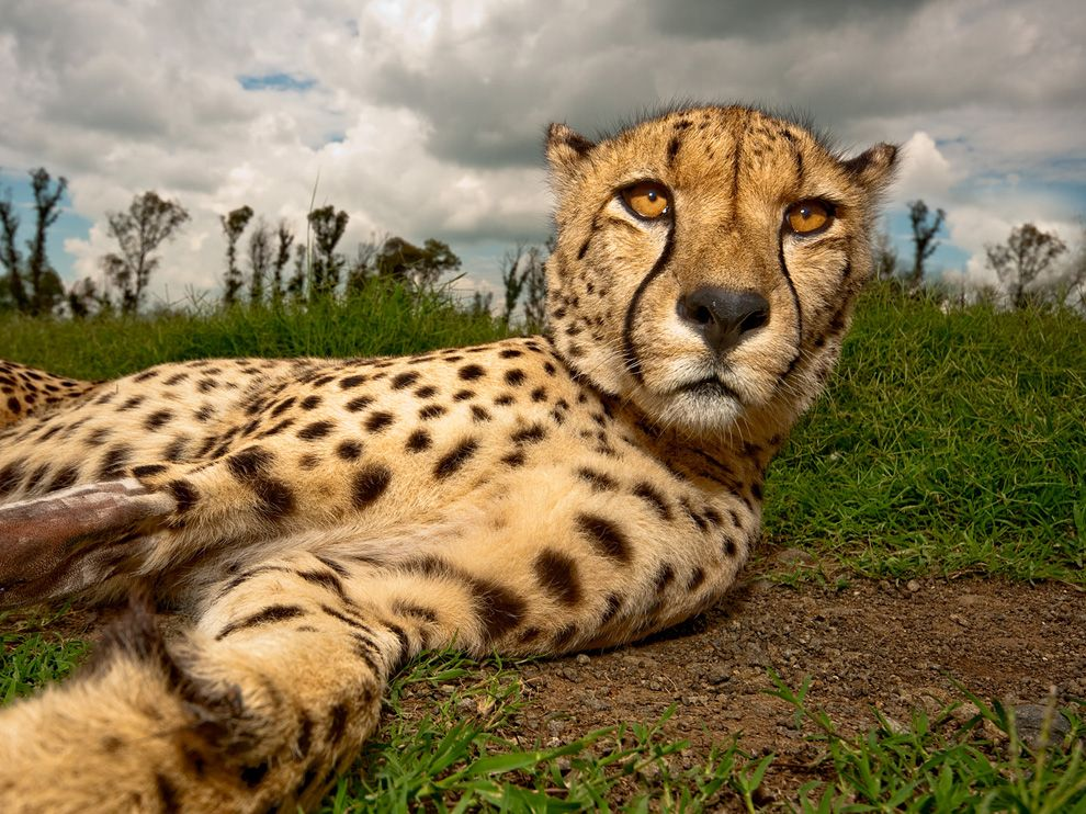 Beautiful Dangerous Wild Animals Pets Of Africa: The Best