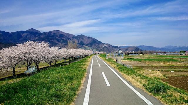 上田から千曲川自転車道で千曲市へ。あんずの里から松代を経由して再び千曲川沿いを走り長野まで。真田氏ゆかりの城址と桜・杏の名所を巡るサイクリングコース