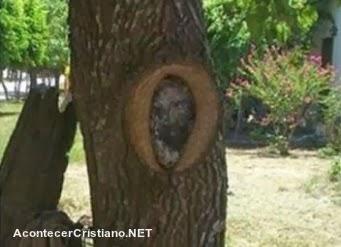 """El rostro de """"Jesucristo"""" en un árbol"""