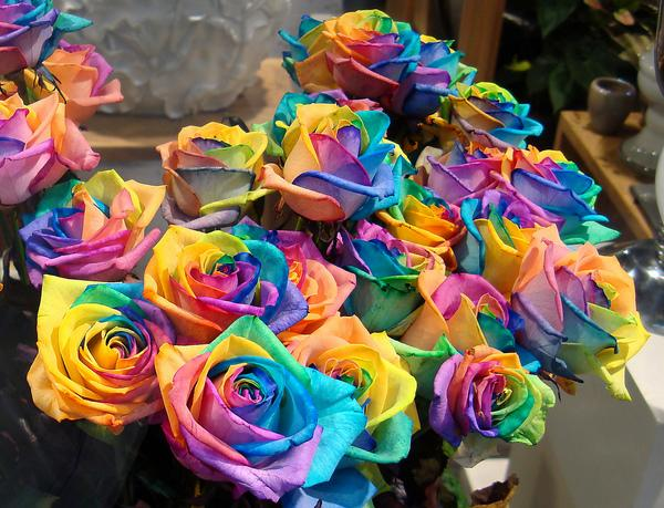 World Of Technology: How to grow a Rainbow Rose, Naturally