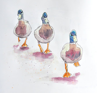 Watercolour and ink mallard ducks