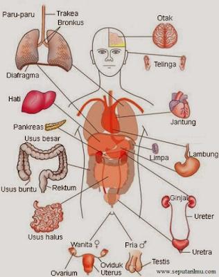 Pengertian,  Macam-Macam, dan Fungsi Sistem Organ Pada Manusia dan Hewan