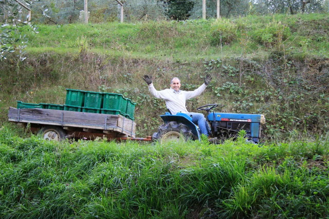 vivere a pierino: resoconto della raccolta delle olive