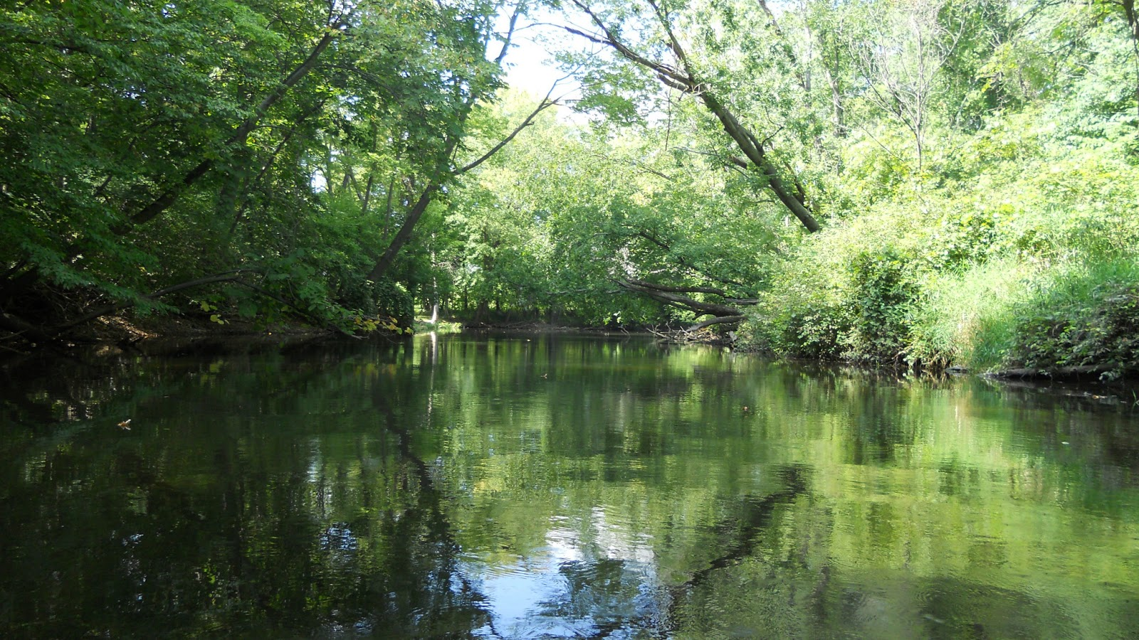 Canoeing the Thornapple River: One of Michigan's Most