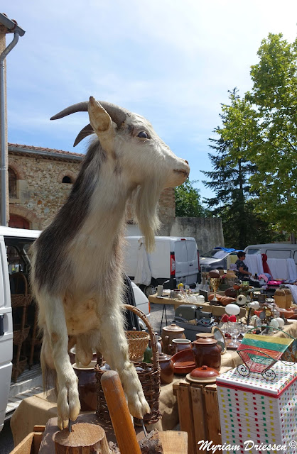 billy goat in a flea market south of France
