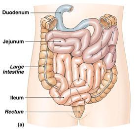 Penyakit Sistem Pencernaan