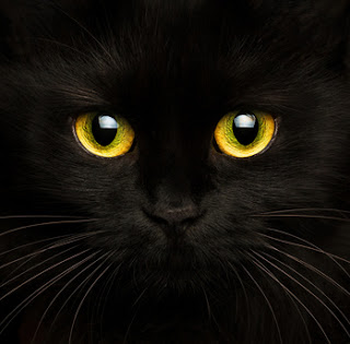 Do cats see in the dark? It depends on how dark it is.