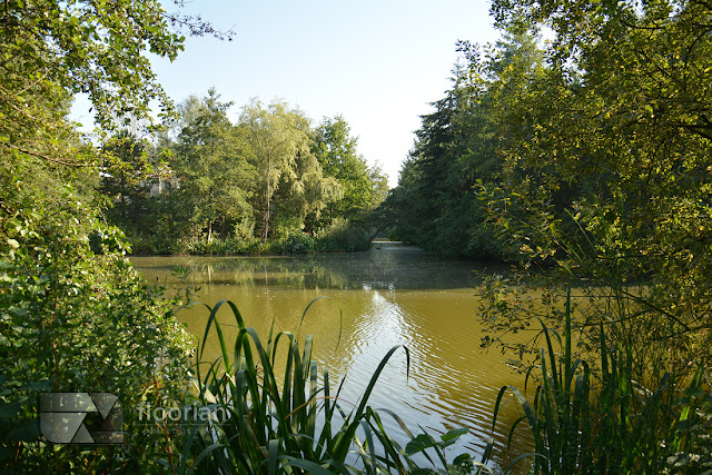 Center Parcs Bispinger Heide w Bispingen w Dolnej Saksoni - atrakcja turystyczna w Niemczech