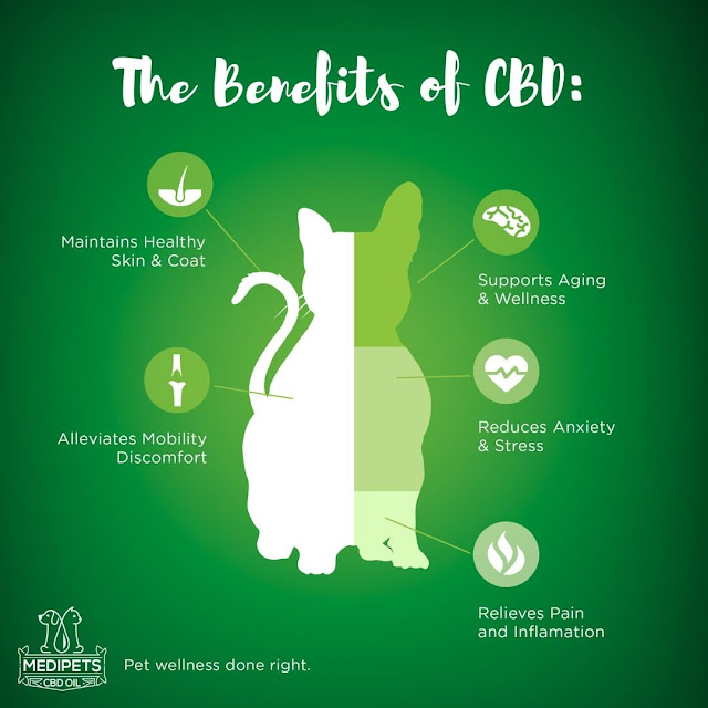 The Benefits Of Giving Your Pet CBD Oil By Barbies Beauty Bits and Medipets