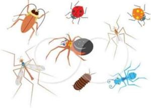 Ξεφορτωθείτε κουνούπια, μύγες και μυρμήγκια με φυσικό τρόπο και χωρίς να ξοδέψετε ούτε ένα ευρώ!