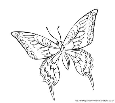 Gambar Mewarnai Kupu-kupu 3