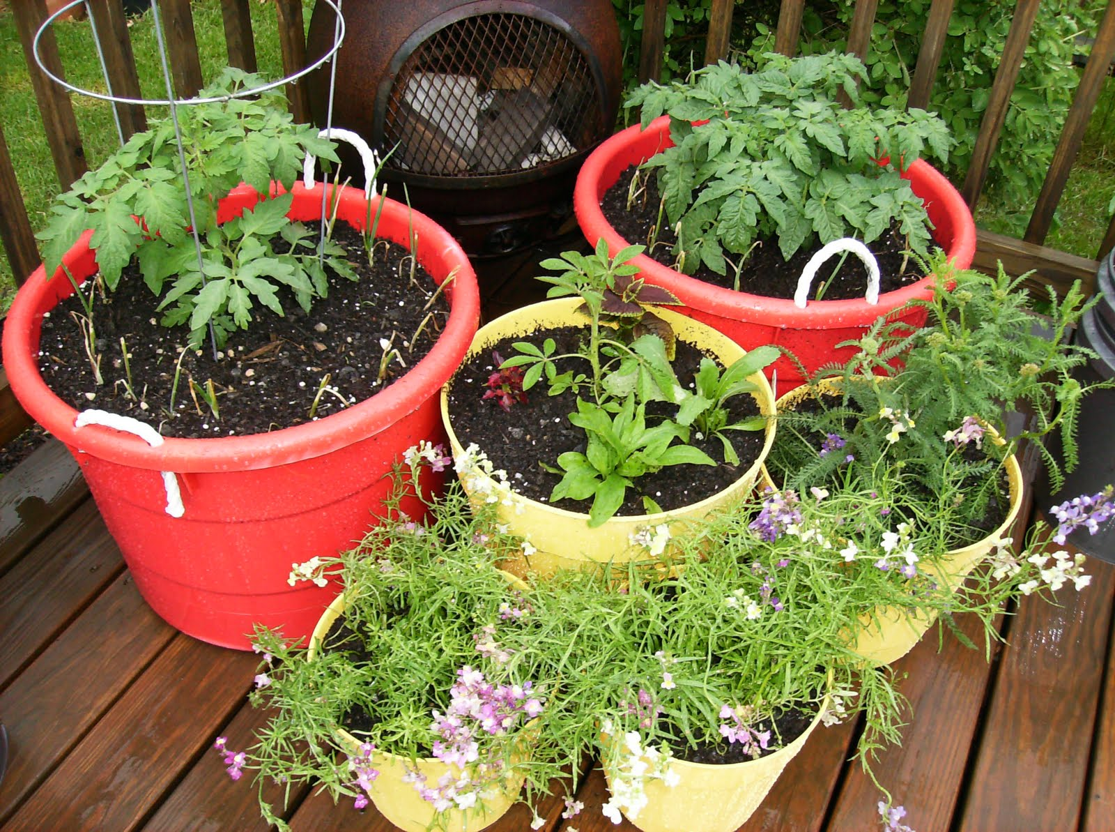 Container Vegetable Gardening josaelcom