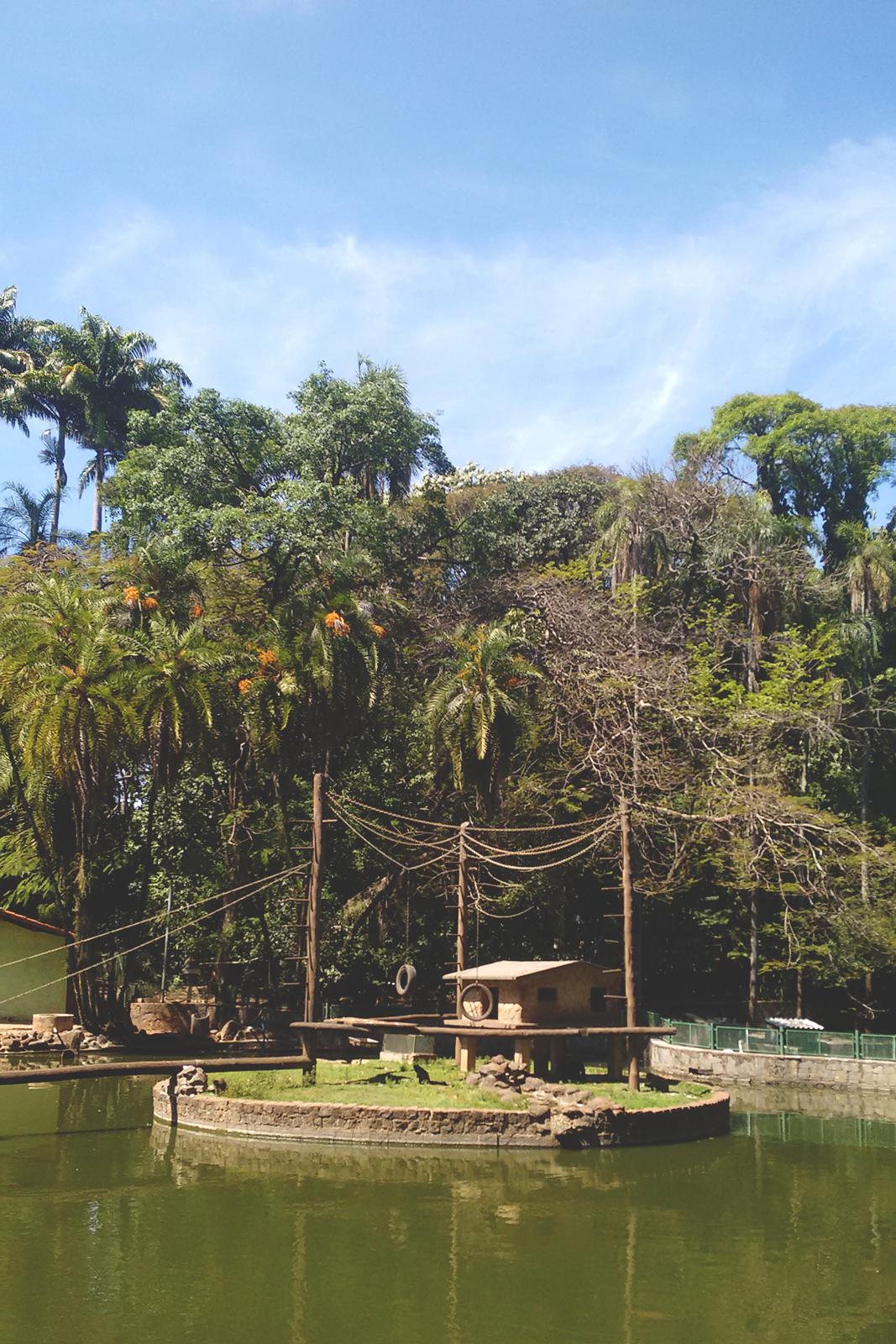 macacos lago zoológico campinas