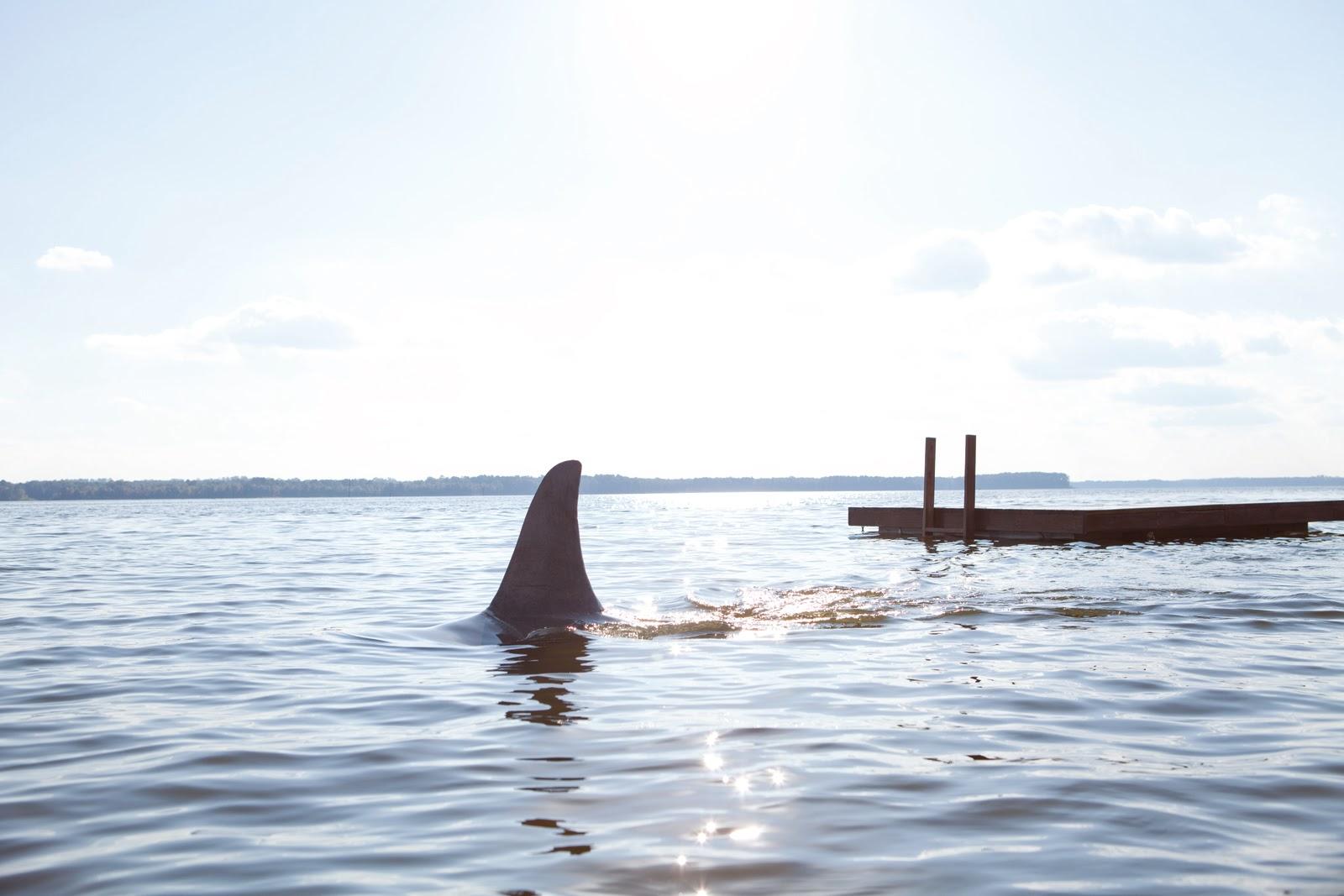 Gute Hai Filme