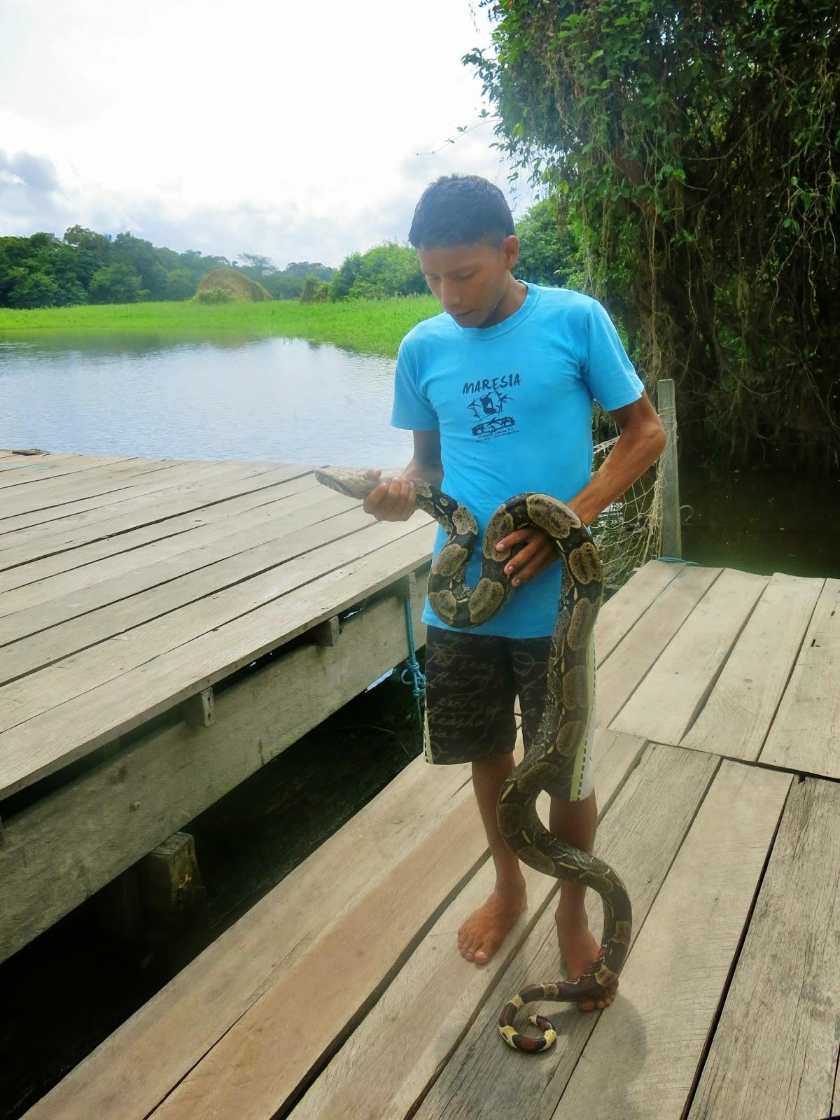 Nativo da Amazônia