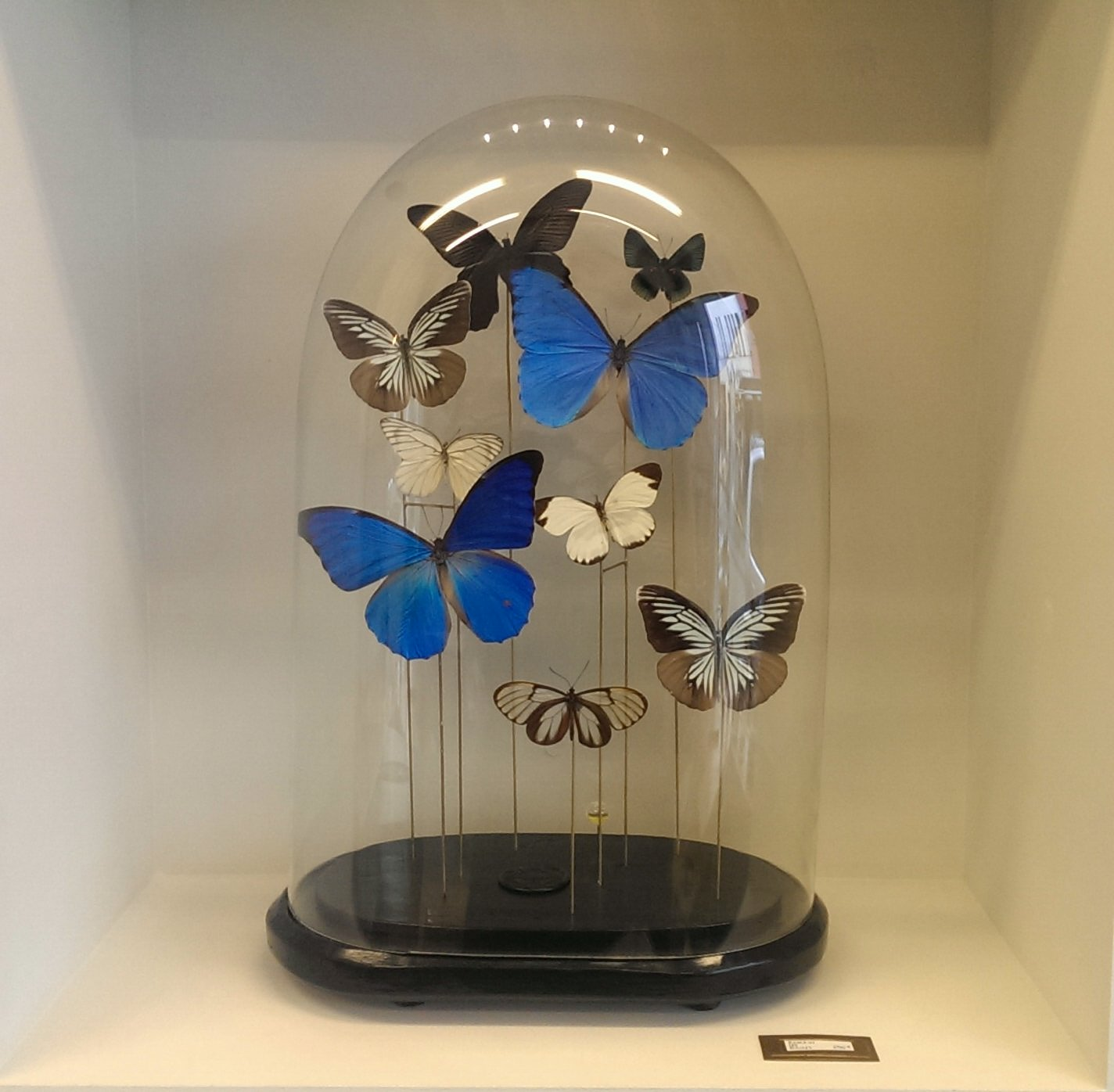 Colourful butterflies in a globe