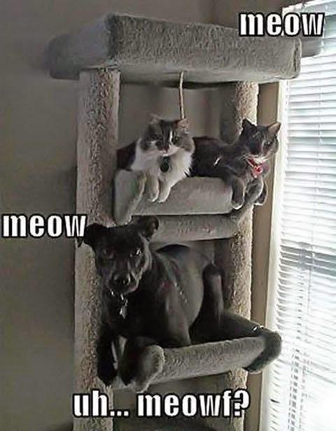 Funny Dog Cat Meowf Joke Picture