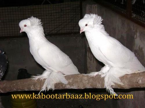 By Photo Congress    Olx com pk Lahore