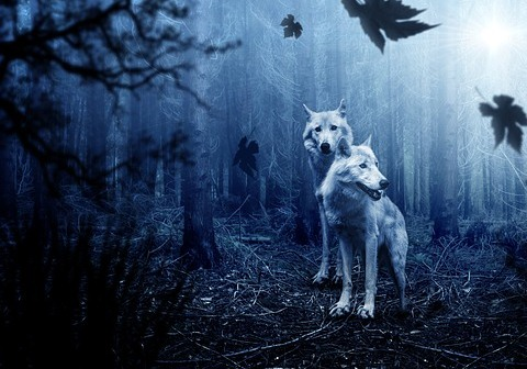 Cerita 3 Babi dan 1 Serigala dalam Bahasa Inggris