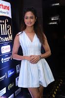 Shanvi Looks super cute in Small Mini Dress at IIFA Utsavam Awards press meet 27th March 2017 115.JPG