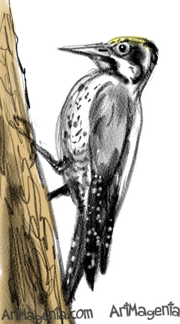 Three-toed Woodpecker sketch painting. Bird art drawing by illustrator Artmagenta