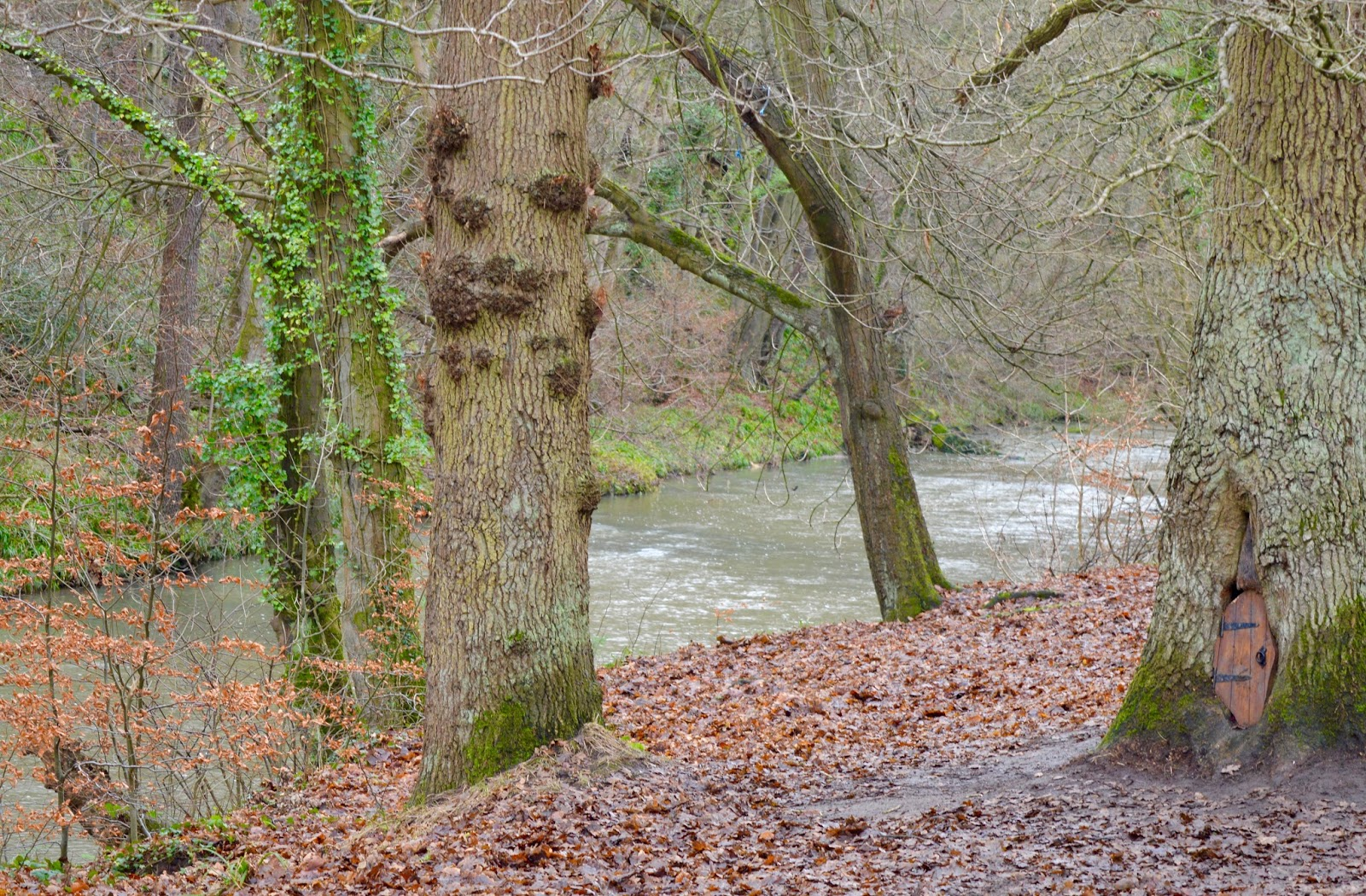 Our Visit to Plessey Woods - A FREE day out in Northumberland. It was very muddy and the perfect chance for Harry to put his GORE-TEX shoes through their paces - river walk